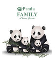 panda family cute animals detailed vector image
