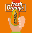 hand holding fresh organic fruit papaya vector image