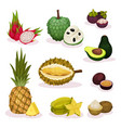 detailed flat set of different exotic vector image vector image
