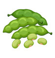 green beans on white background vector image