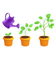 infographic different stages young plants vector image