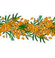 seamless ornament branch of sea buckthorn with vector image