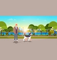 senior man walking with husky dog urban city park vector image