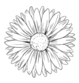 Flower shape and form vector image vector image