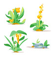 jungle plants set vector image vector image