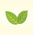 pistachio leaf in cartoon vector image vector image