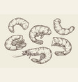shrimp set sketch seafood food vintage vector image vector image