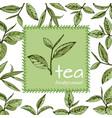 green tea logo12eps vector image