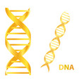 gold dna on white background vector image vector image