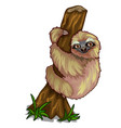cute sloth clinging to the trunk of tree vector image