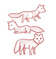 dog or wolf or fox hand drawn on white background vector image