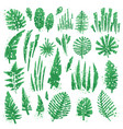 tropical textured leaves set with expressive vector image vector image