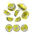 watercolor hand drawn set of lemon sketch vector image