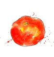 watercolor red tomato vector image vector image