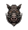 cruel wild boar colorful vintage template vector image vector image