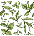 seamless pattern with green tea vector image