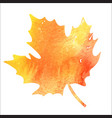 bright orange watercolor autumn maple leaf vector image