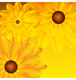 card with sunflower vector image vector image
