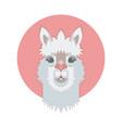 cute adorable alpaca or lama face vector image