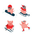 funny cartoon pigs winter sport activities vector image vector image
