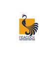 peacock bird icon vector image vector image