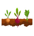 vegetables growing in ground one line turnip vector image vector image