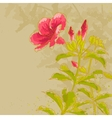 Allamanda flower on toned background vector image vector image