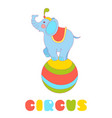 circus elephant on the big ball isolated on white vector image