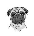 cute pug dog portrait funny vector image