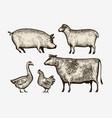 farm animals hand-drawn sketch vintage vector image