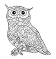hand drawing owl vector image