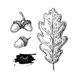oak leaf and acorn drawing set autumn vector image vector image