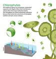 underwater Algae seaweed elements vector image vector image