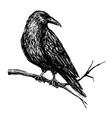 vintage raven Hand drawn vector image