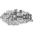 bengal cat text word cloud concept vector image vector image