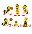 collection of the big yellow bee vector image