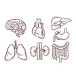 hand drawn of human organs medical vector image