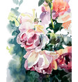 original watercolor painting of pink roses vector image