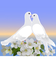 Two white doves and branch of blossoming apple tre vector image