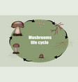 diagram mushroom anatomy life cycle stages vector image vector image