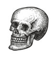 human skull with a lower jaw hand drawn vector image