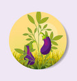 plantation vegetable harvesting eggplant vector image