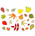 Autumnal colorful leaves set vector image vector image