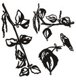 set hand drawn birch branch isolated on white vector image