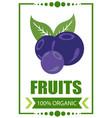 blueberry logo vector image vector image