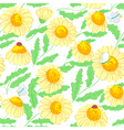 chamomile flowers vector image vector image