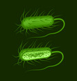 green rod-shaped bacillus vector image vector image