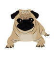 pug image vector image vector image