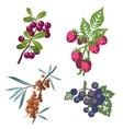 Berrys set 01 vector image vector image