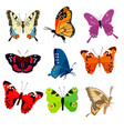 cute colorful butterflies vector image vector image